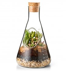 Home Decor: Modern Glass Terrarium Kit